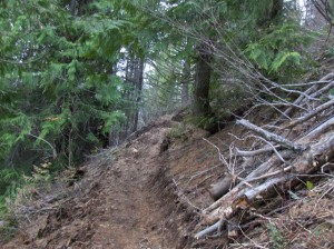 Fresh section of uphill bike trail